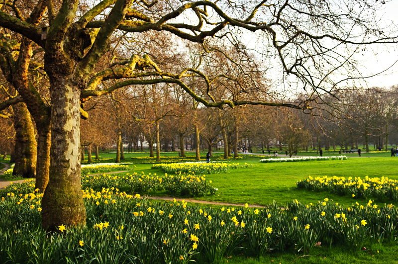 Image of a park in Bromley